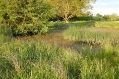 Darsham Marshes